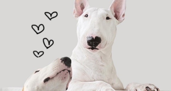 Fantastic Illustrations Of A Bull Terrier Made By His Owner