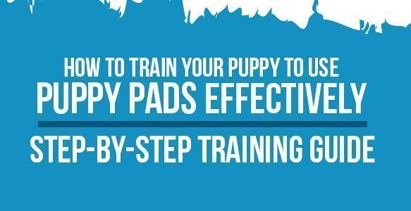 How to Train Your Puppy to Use Puppy Pads Effectively