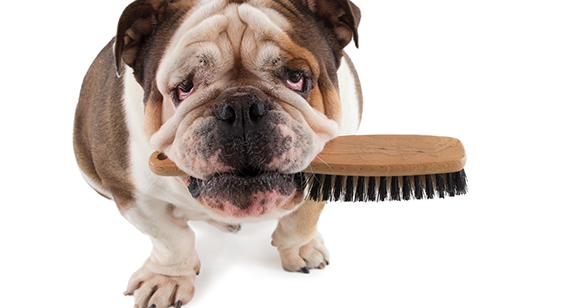 Best Dog Brush For Your Here Are