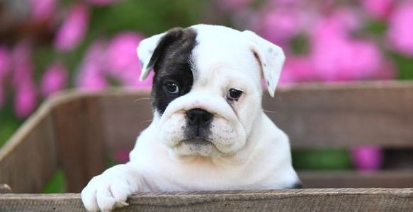 Why Do Dogs Cry? 3 Tips to Stop Your Puppy Crying at Night