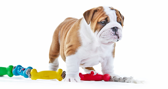 Best Dog Toys : Top best indestructible dog toys for aggressive chewers