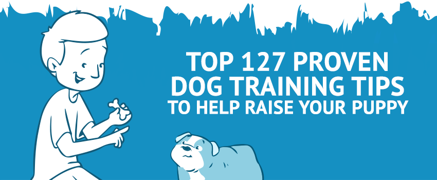 Top 127 Proven Dog Training Tips