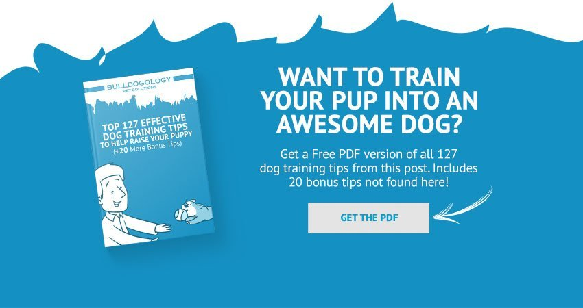 Download Dog Training Guide