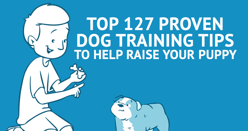 Top 127 Proven Dog Training Tips to Help Raise Your Puppy