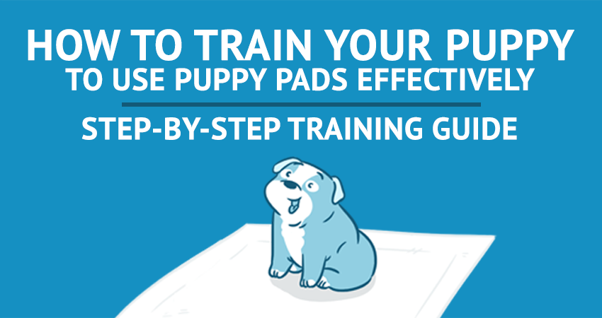 How To Use Puppy Training Pads Effectively