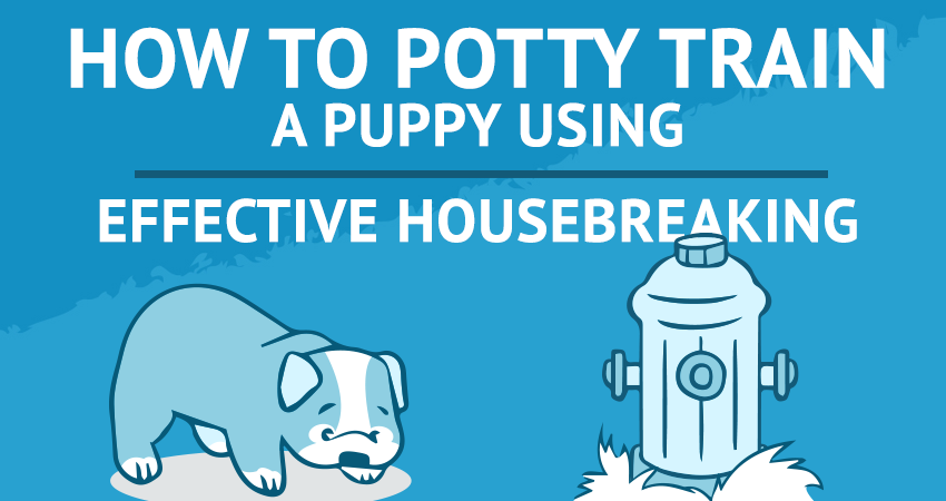 How To Potty Train A Puppy Using Effective Housebreaking Bulldogology