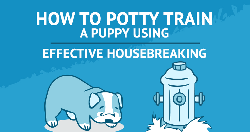 How to Potty Train a Puppy Using Effective Housebreaking
