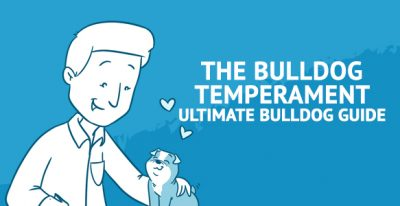 [The Bulldog Temperament] Ultimate Bulldog Guide for Owning, Caring and Training The Best Puppy