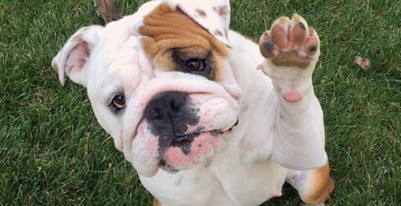 yeast infection in dogs paws