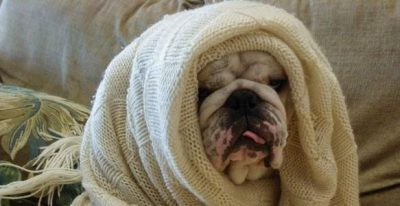 dog has a cold