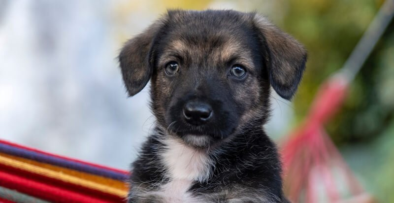 puppy-its-name
