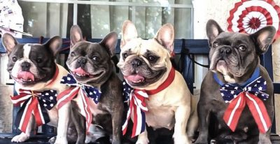 4frenchbulldogs_4thofJuly