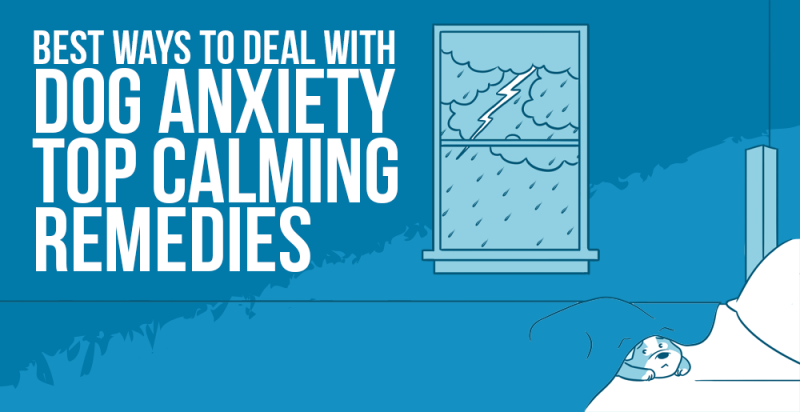 SumoMe Best Ways to Deal with Dog Anxiety – Top Calming Remedies