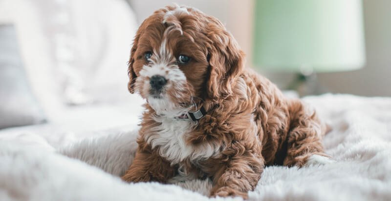 5Tips-on-How-to-Calm-My-Anxious-Dog