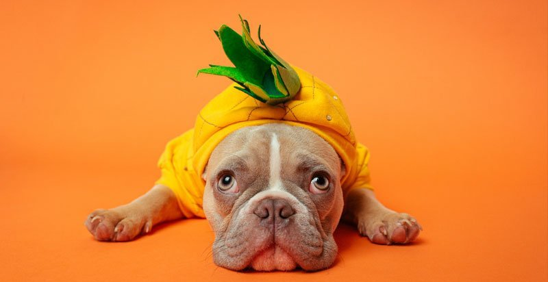 Can dogs eat pineapple 1