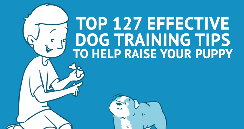 127 Dog Training Tips
