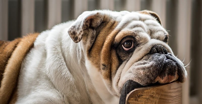 best-joint-supplements-for-dogs