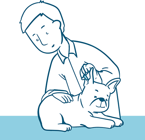 Tips for Preventing Bulldog Ear Infections