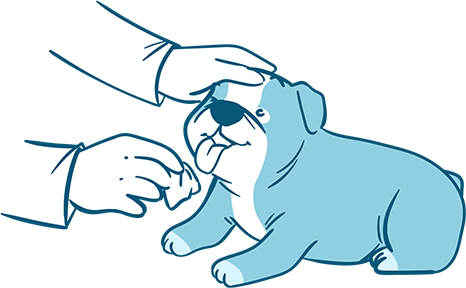 How to Clear Up Dog Tear Stains