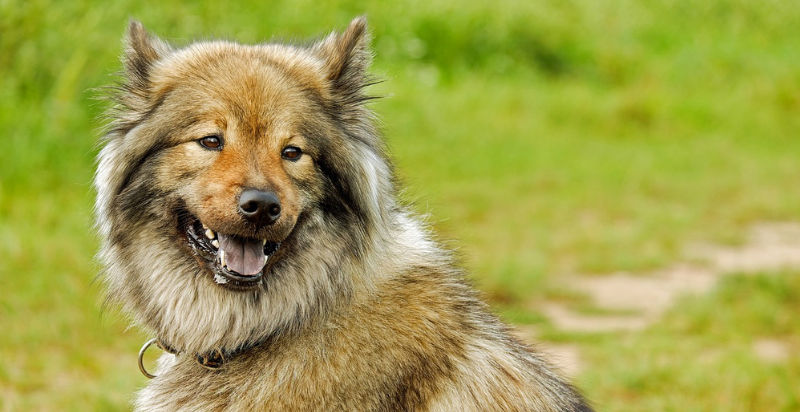 can a vaccinated dog get rabies