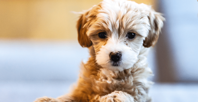 how to discipline a puppy when potty training