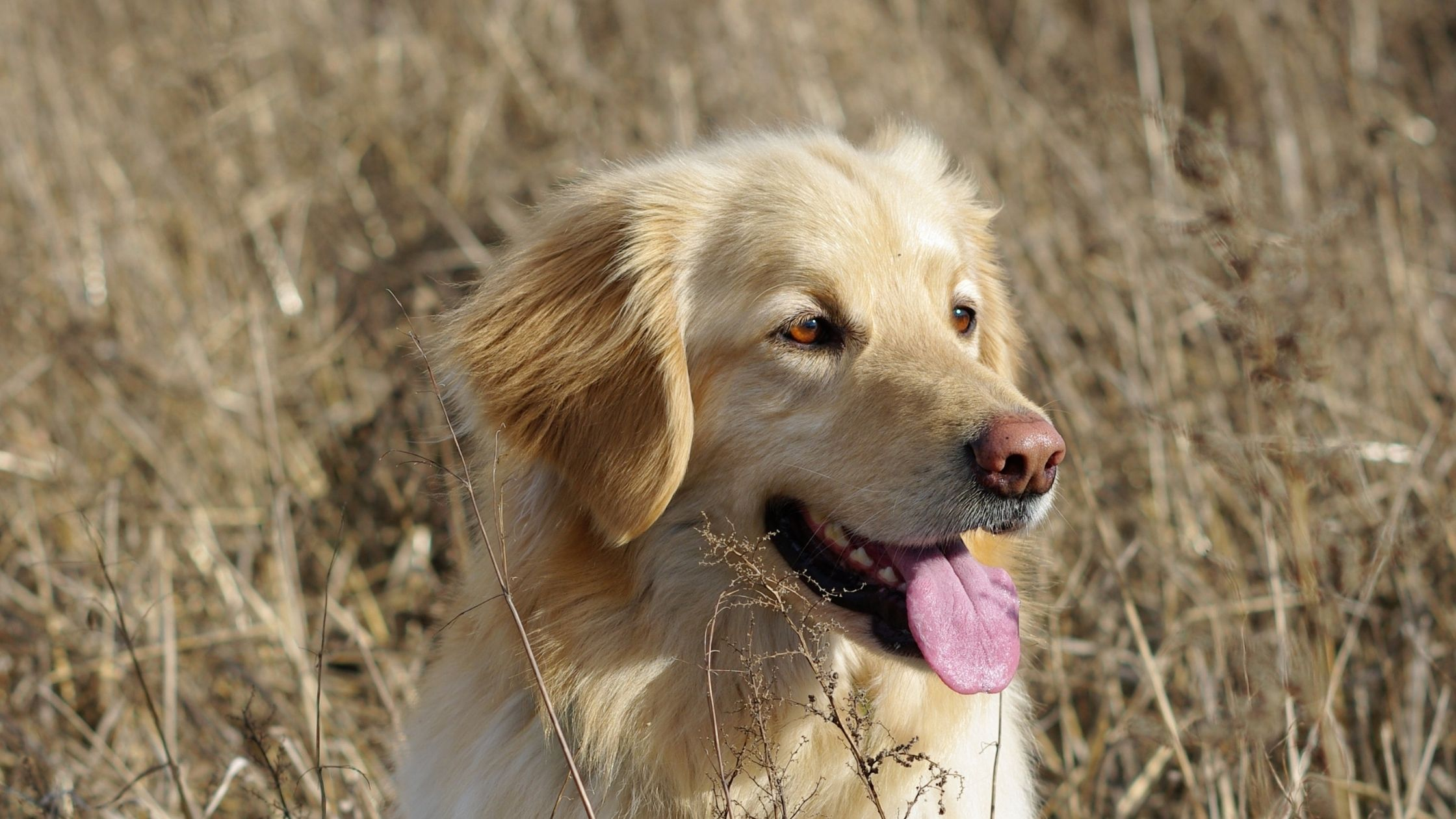 signs that your dog is getting old
