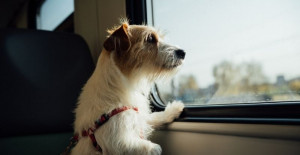 dog health certificate for travel