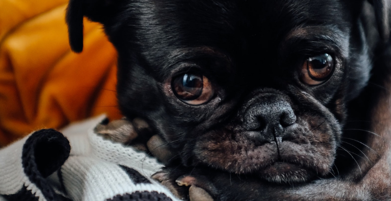 how to tell if your dog is sick