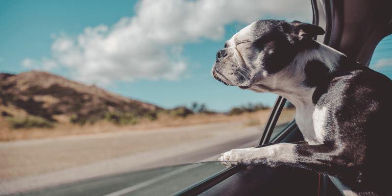 travel with puppies