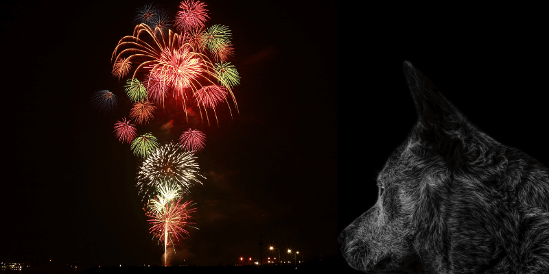 what can i give my dog for fireworks anxiety